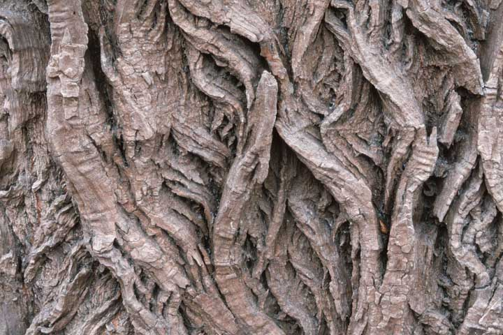 willow bark herbs for joint pain