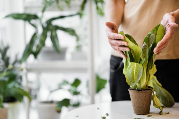Small Indoor Plants For Apartment Living