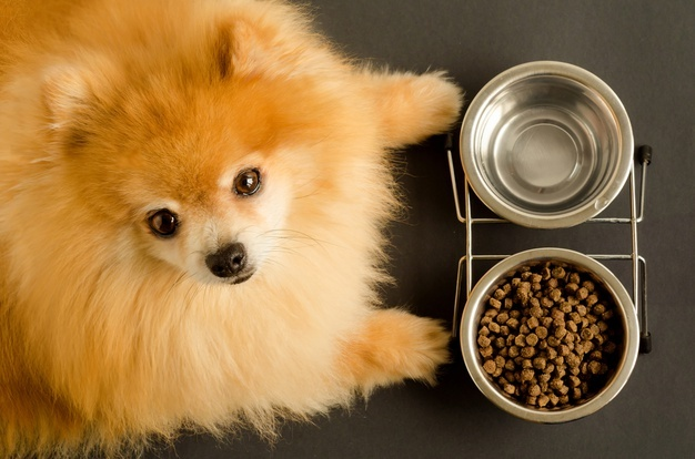 Wet Canned Dog Food